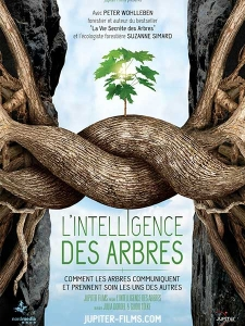 L'intelligence des arbres